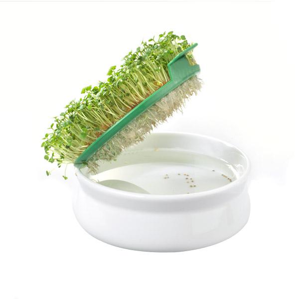 Germoir coupelle pour les graines à mucilage